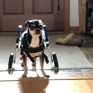 Other - My Little Loves Are Why I'm Poshing